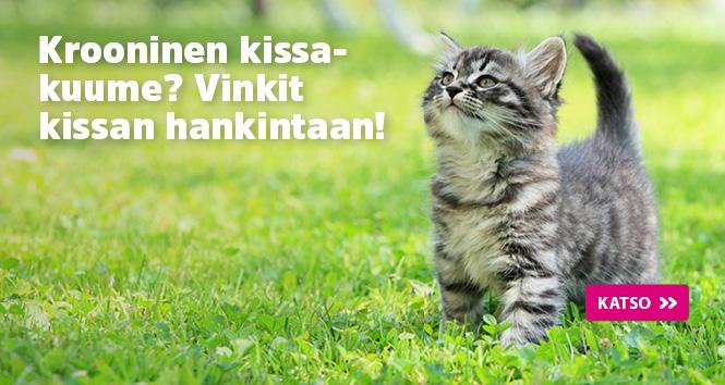 Kitten-tips