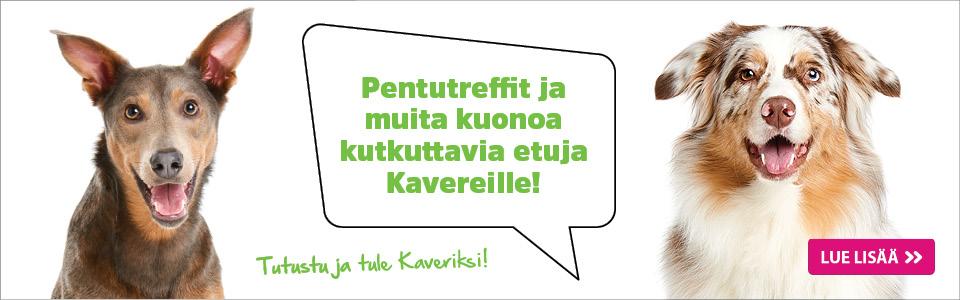 Tule Kaveriksi!